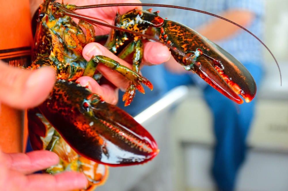 Captain John describing lobster anatomy. - Yelp