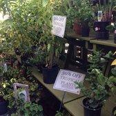 Photo Of Johnson S Florist Garden Center Washington Dc United States Im