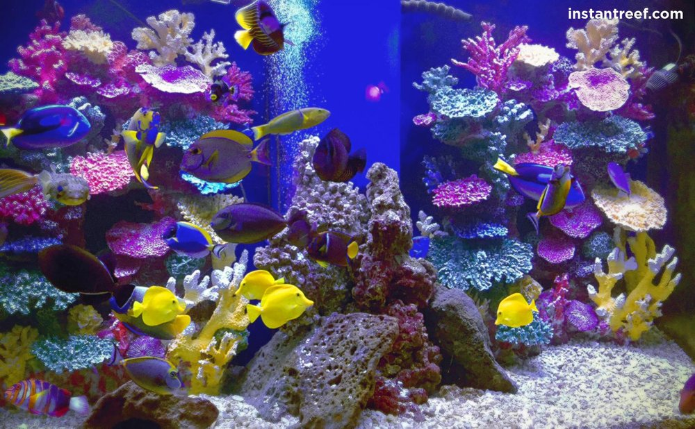 Instant Reef Artificial Coral Reef Tank Yelp