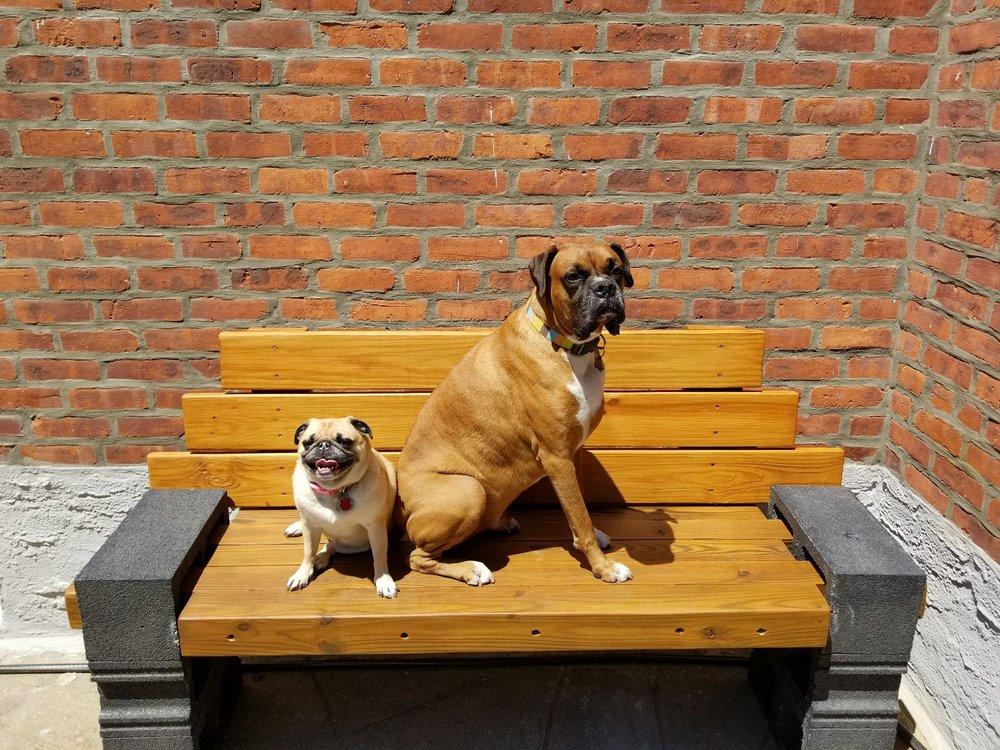 Pet Spa Resort & Dog Training Center: 1872 Grand Ave, Baldwin, NY