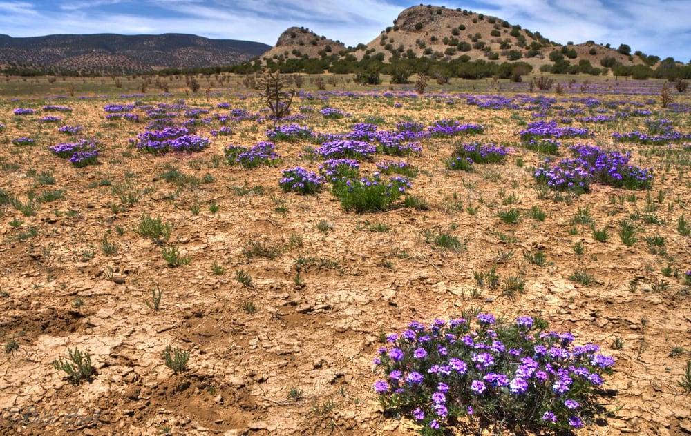 Image result for new mexico high desert