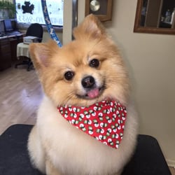 Artistic Pet Grooming 10 Reviews Pet Groomers 625 N Midlothian