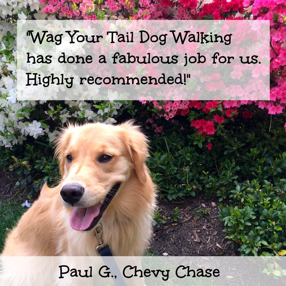 Wag Reviews Dog Walking