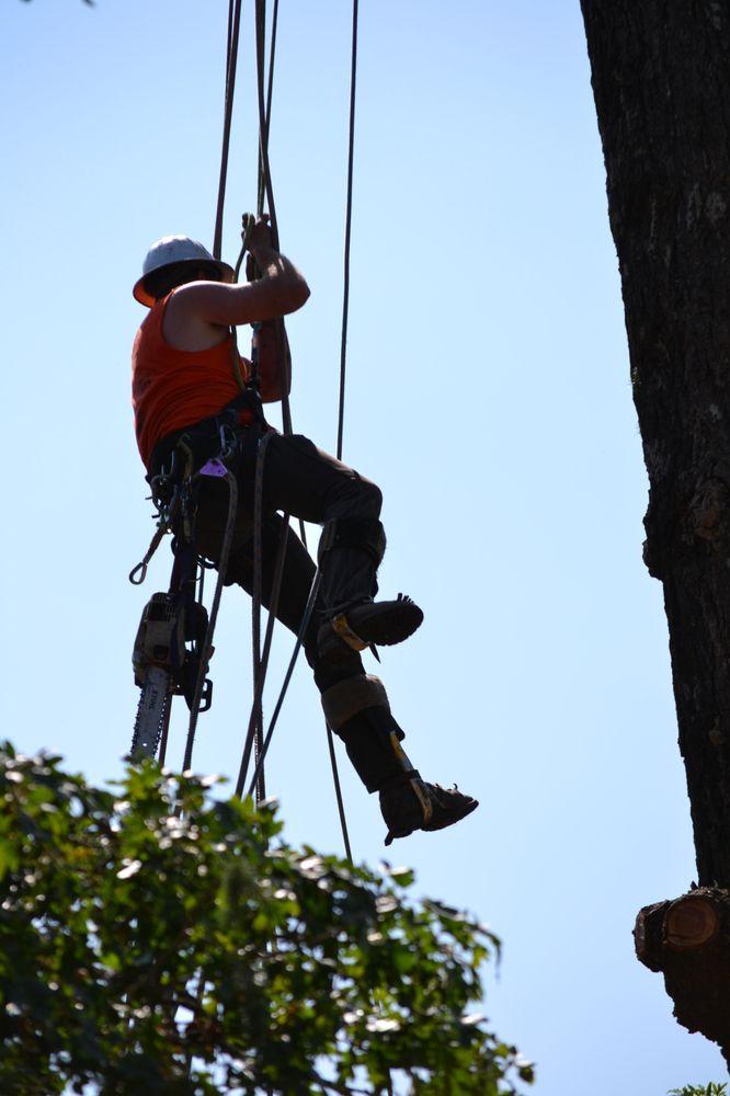 Charleston Tree Services: 1819 Fieldbrook Rd, Mckinleyville, CA