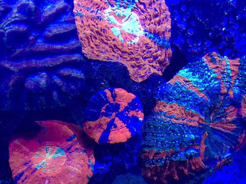 Aquatic Art: 9337 Commerce Center St, Littleton, CO