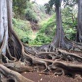 allerton garden reviews. photo of national tropical botanical garden - kalaheo, hi, united states. allerton reviews