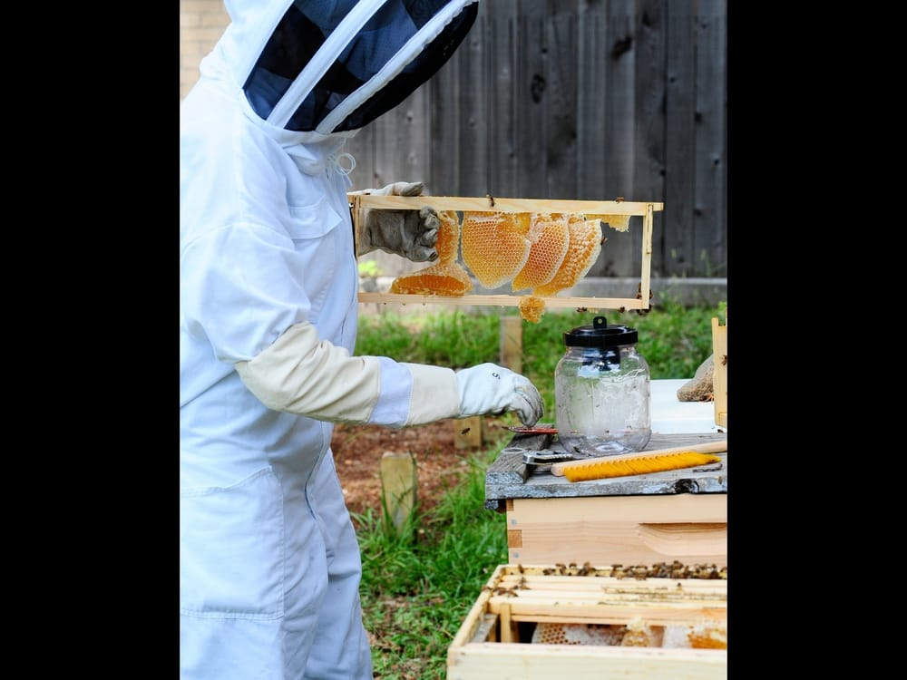 Heights Honey Bee Project: 705 E 11th St, Houston, TX