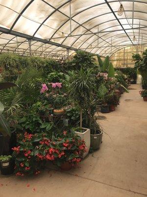 Whitfill Nursery 820 N Cooper Rd Gilbert Az Garden Centers