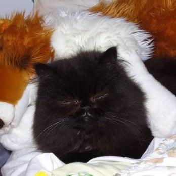 kittens cat adoption kitten title a pets tabitha cats adopt ne pet lincoln