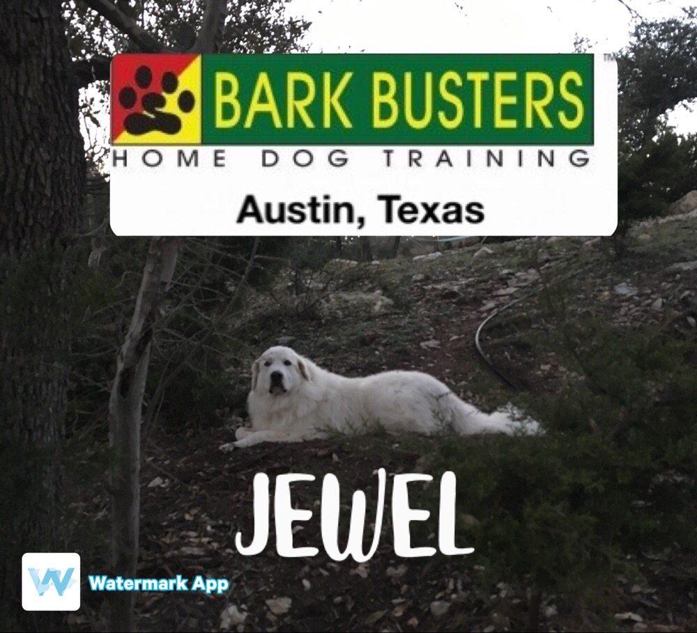 Bark Talk Dog Training