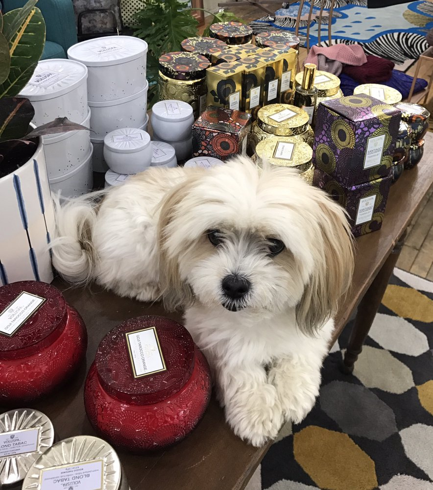 Even Puppies Love Candles Yelp