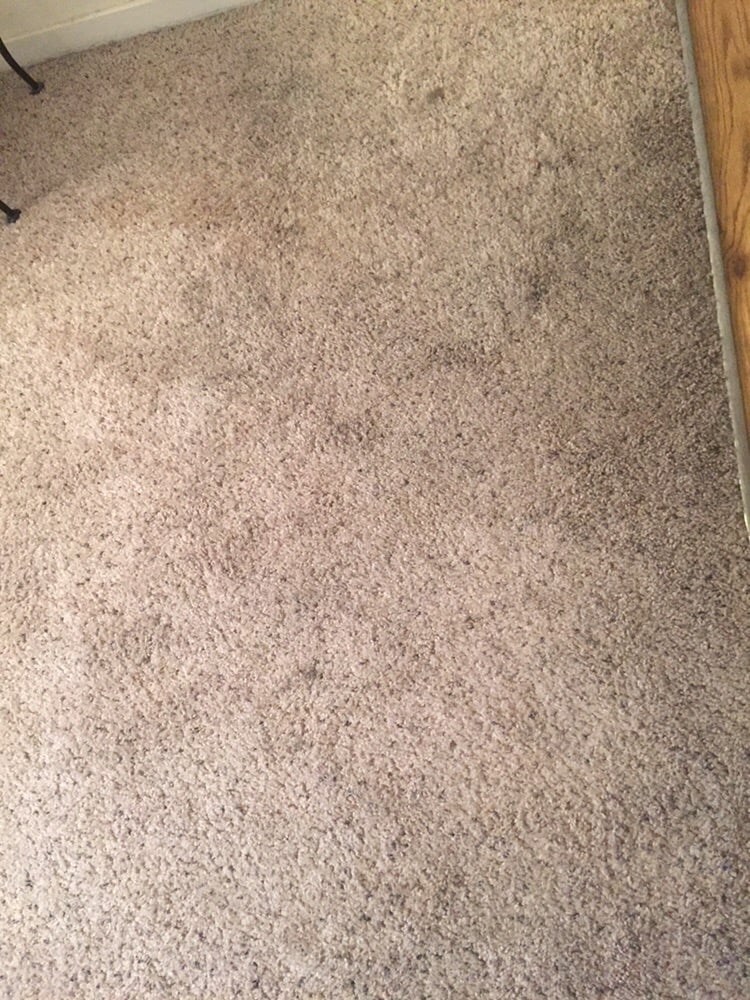 Photo Of The Palms Apartment Homes   Sacramento, CA, United States. Nasty  Carpet