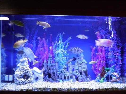 Aquarium designs by michael aquariums 10 e willow st millburn photo of aquarium designs by michael millburn nj united states voltagebd Images