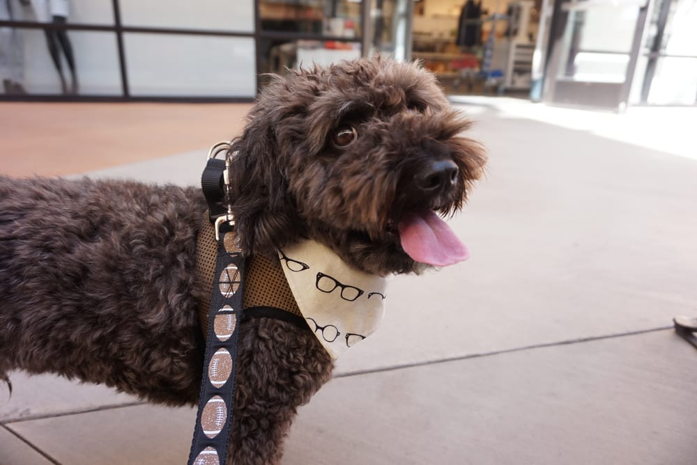 Dog Friendly Stores - Yelp