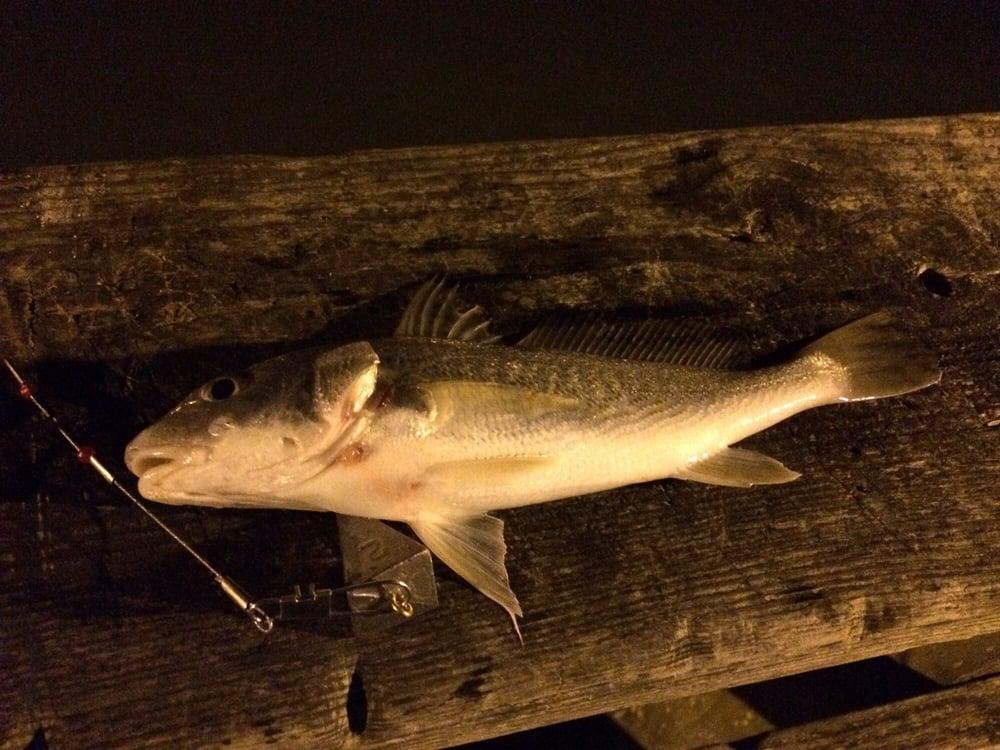 Kure beach fishing pier 23 photos 17 reviews fishing for Where can i go fishing near me