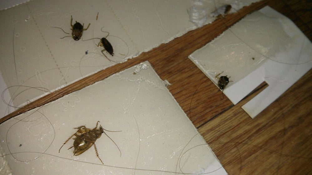 Photo Of Milwaukee Apartments   Seattle, WA, United States. Our Apartment  Roach Collection