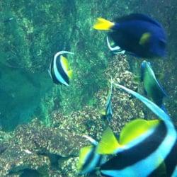 Aquarium du Grand Lyon - 10 photos & 13 avis - Aquarium - 6 place du ...