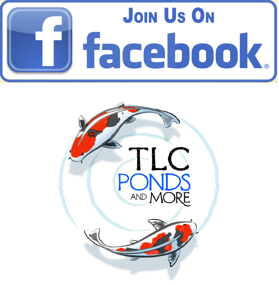 TLC Ponds and More