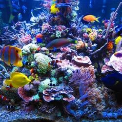 Gulf Coast Aquarium Pet Stores 469 Harrison Ave
