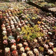 Rock Landscape Photo Of Hashimoto Nursery Los Angeles Ca United States
