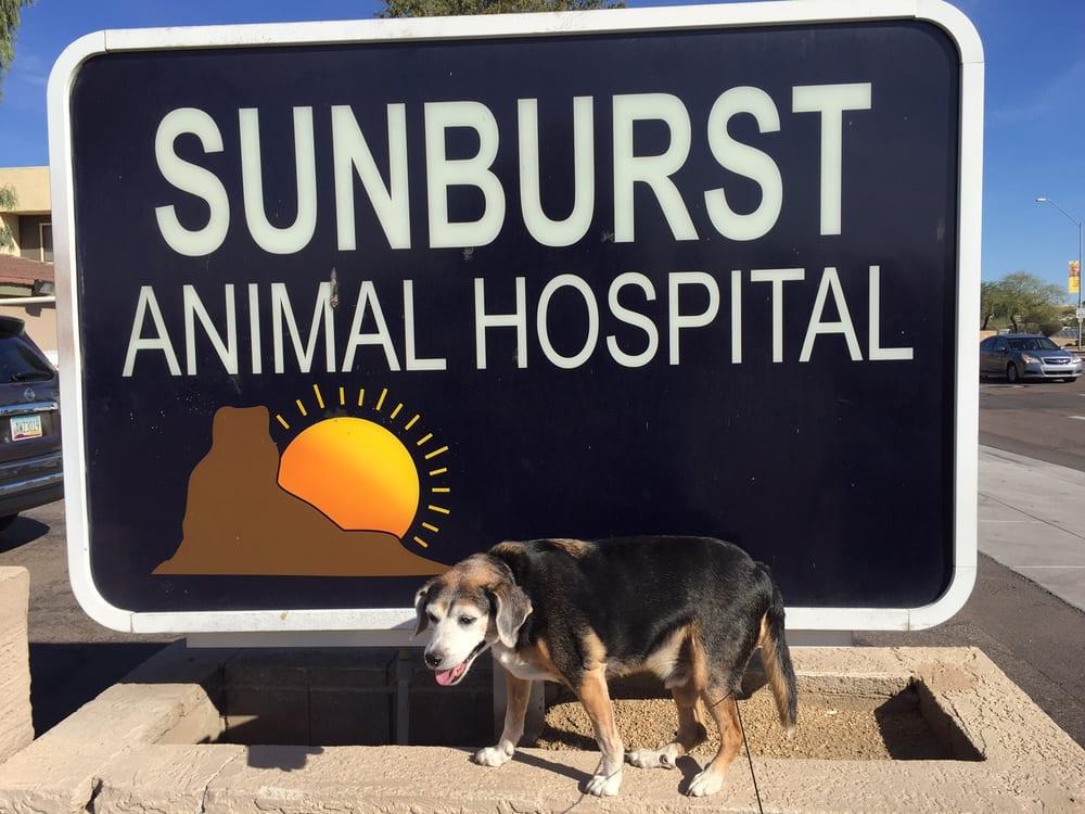 Sunburst Animal Hospital - 24 Photos & 42 Reviews ... - photo#14