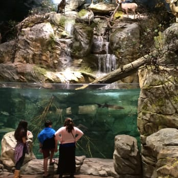 Bass pro shops 481 photos 158 reviews fishing 5160 for Bass fish tank