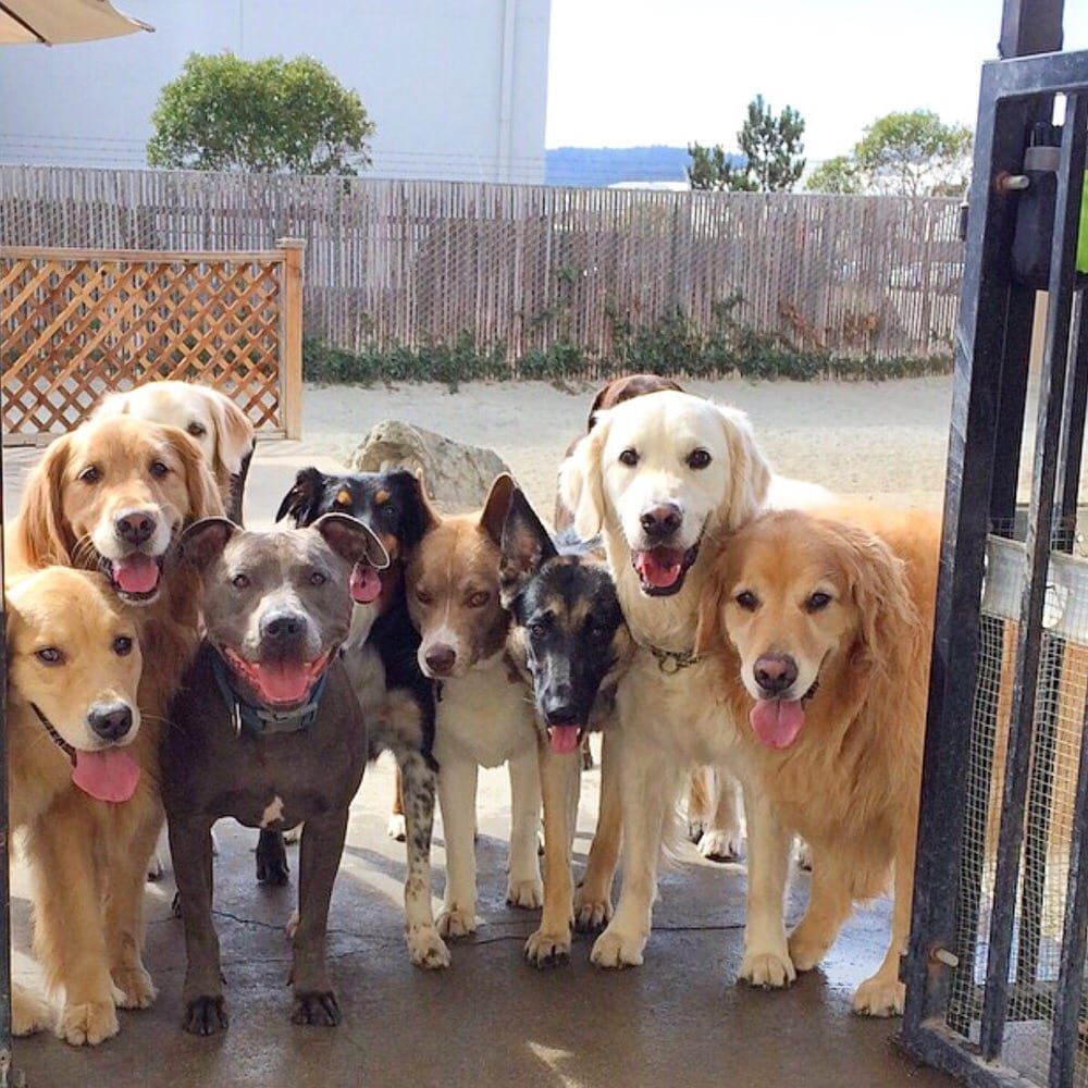 Every Dog Has Its Day Care