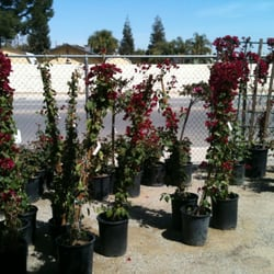 Photo Of Calloway Nursery Bakersfield Ca United States
