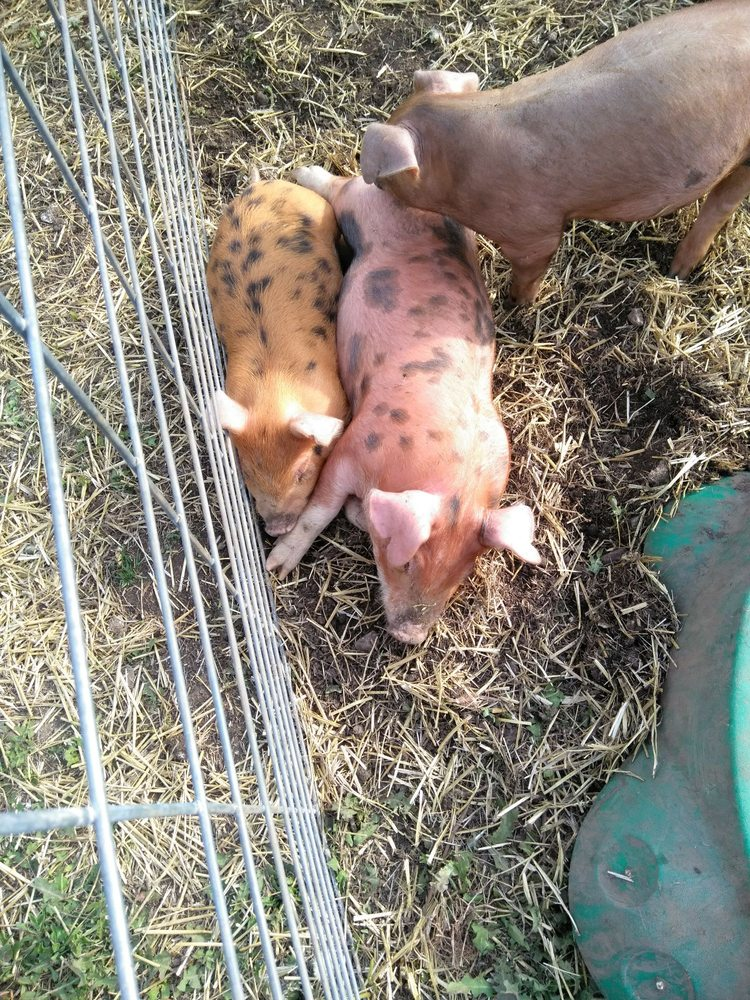 Schwarz Pork and Poultry: 13945 Faucett Rd, Centerville, KS