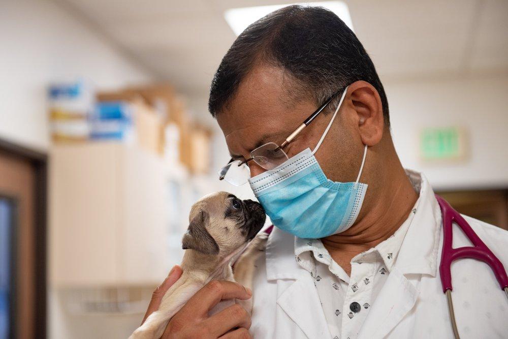 Centre médical vétérinaire de Laguna Beach