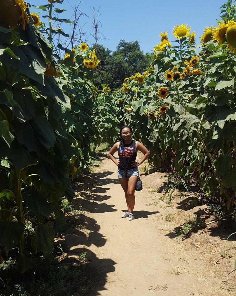 Centerville Station - Sunflower Maze: 16155 E Kings Canyon Rd, Sanger, CA