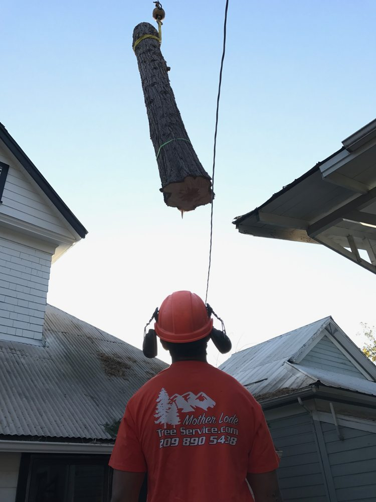Mother Lode Tree Service: Sonora, CA
