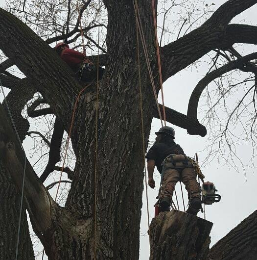 Clark Tree Service: 5055 N Garfield Ave, Kansas City, MO