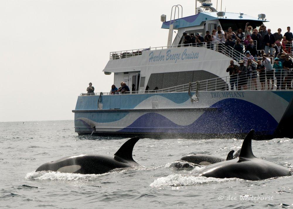 Harbor Breeze Cruises: 100 Aquarium Way, Long Beach, CA