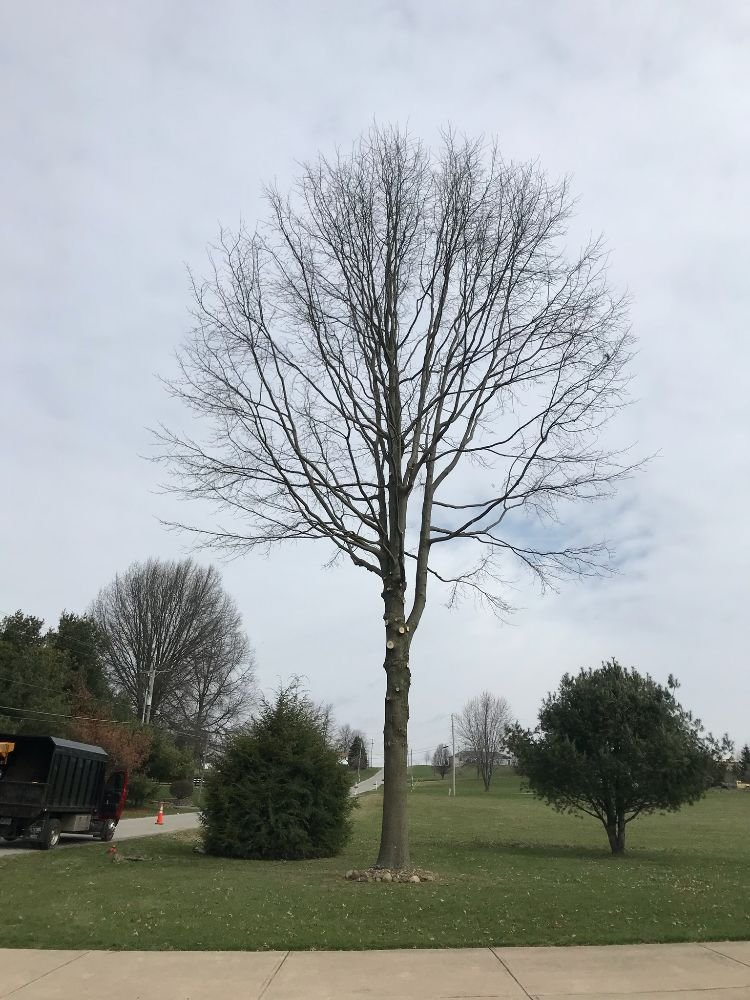 Anywhere Tree Care: Dundee, OH
