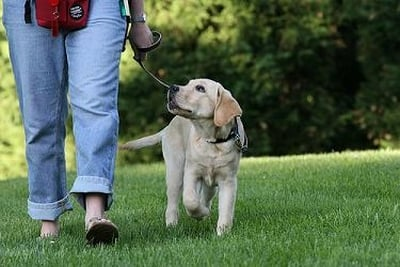 Train This Dog: Savannah, GA