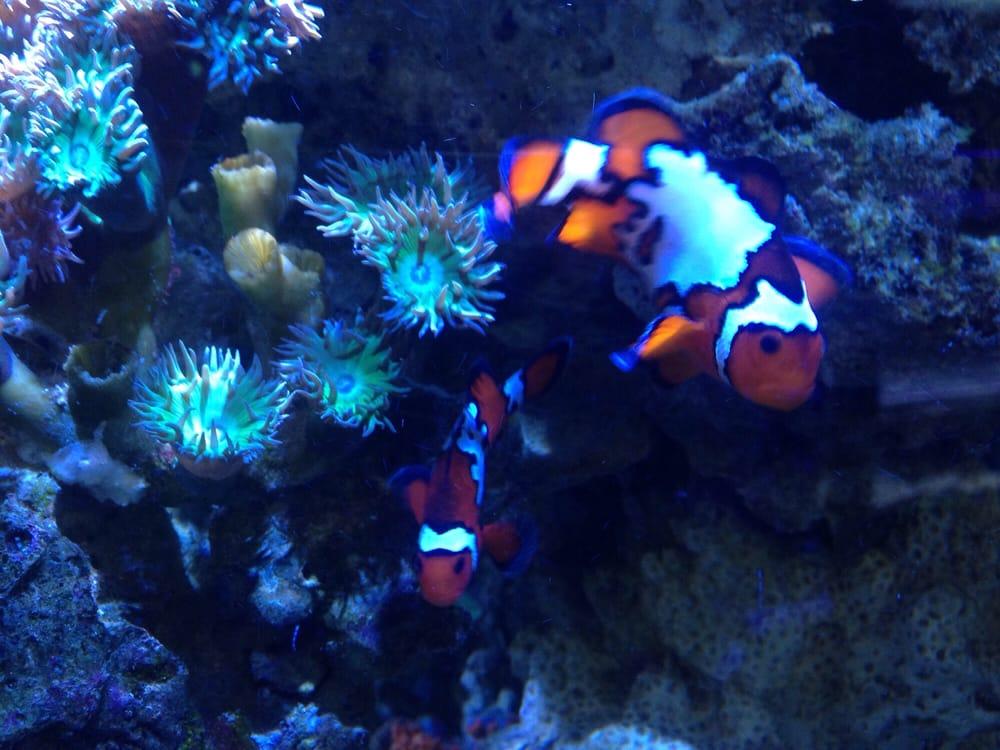 Athens Aquarium & Fish Store: 175 Old Epps Bridge Rd, Athens, GA