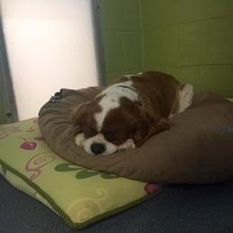 Dog Kennels Spartanburg Sc