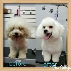 Puppy Boutique Dog Grooming 412 Photos Amp 162 Reviews