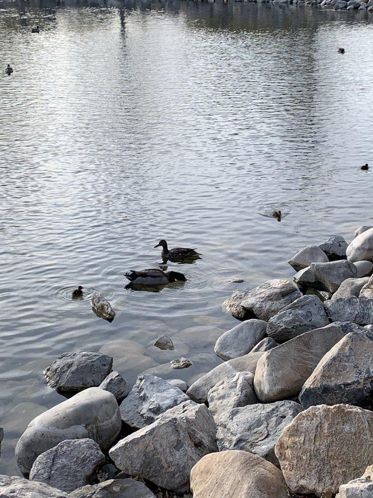 Social Spots from Nielsens Grove Park