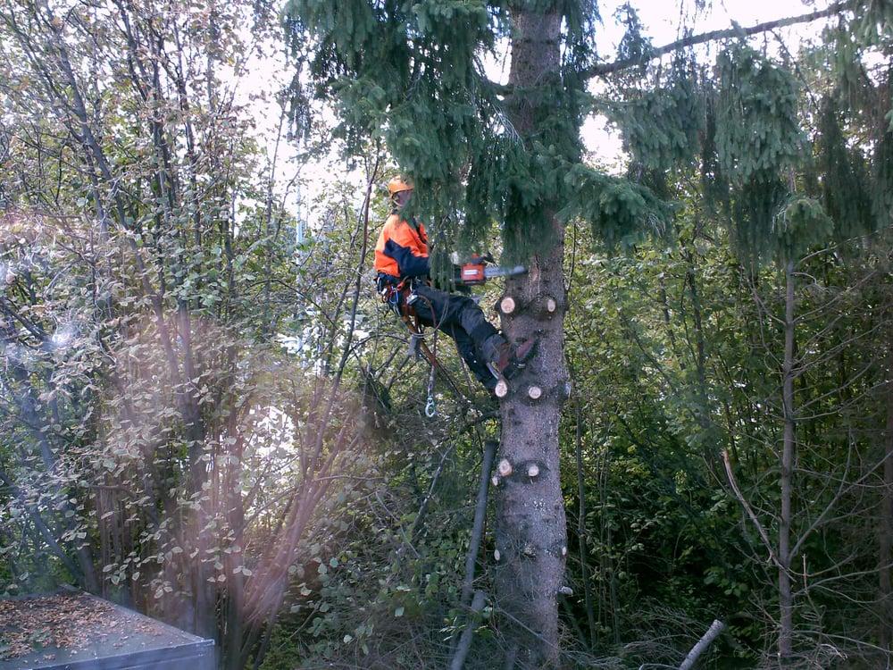 Kletterausrüstung Bielefeld : Arbo domo baumpflege tree services aachen nordrhein westfalen