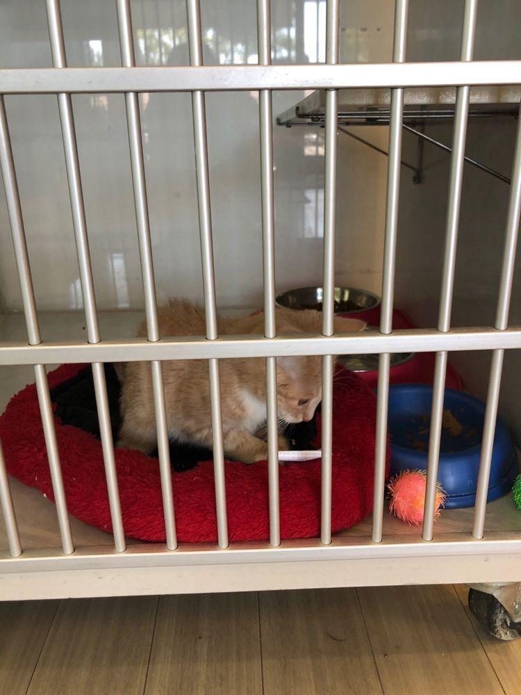Feline Veterinary Center