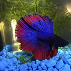 Tropical Fish International - CLOSED - (New) 13 Photos & 56 Reviews