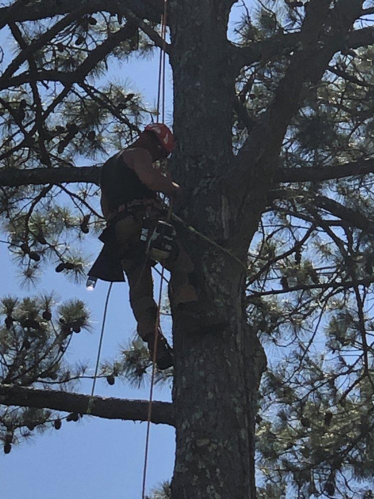 Craig's Quality Tree Service: 9675 15th St Rd, Bessemer, AL