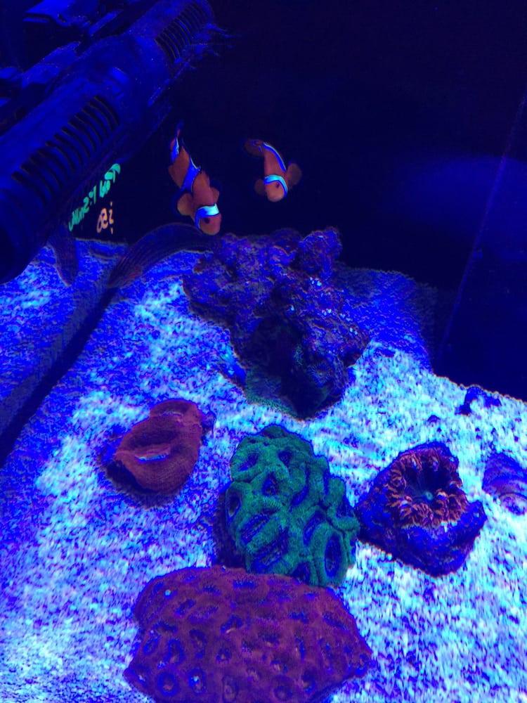 Living Reef: 504 N Alafaya Trl, Orlando, FL