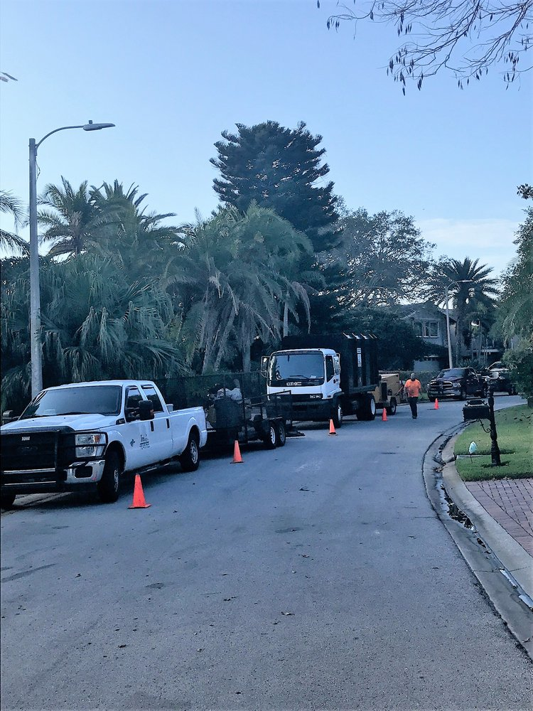 Treeology Tree Service: 3201 118th Ave N, St. Petersburg, FL