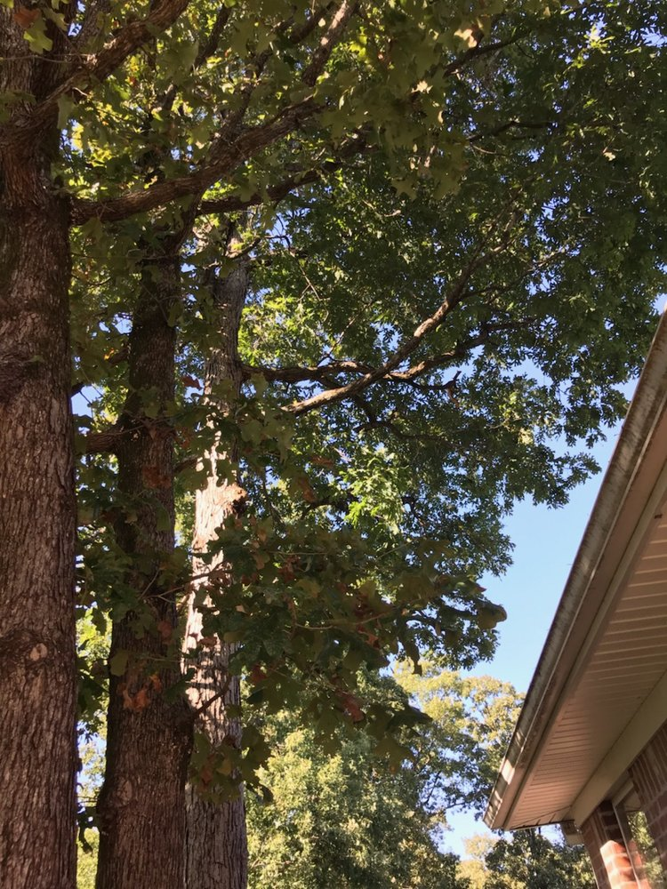 Pastor Tree Services: 7309 Holt Ln, Mabelvale, AR