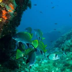 Torra plongée à Belvedere campomoro 20110  Téléphone, horaires et avis