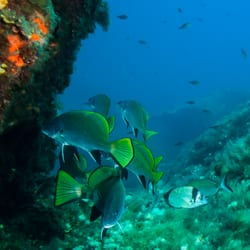 Plongee Sous Marine  Corse  Adresse, Avis & Tarif  TripAdvisor