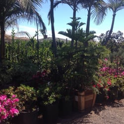 Exceptionnel Photo Of Jauregui Nursery   Gardena, CA, United States. So Many Plants.